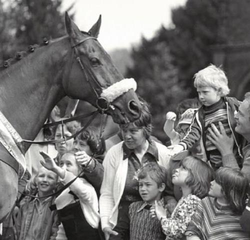 racing horse greeting children and adults at croxteth hall - image in black and white as part of croxteth memories